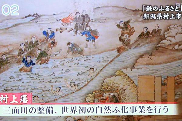 鮭の特性に着目した村上藩